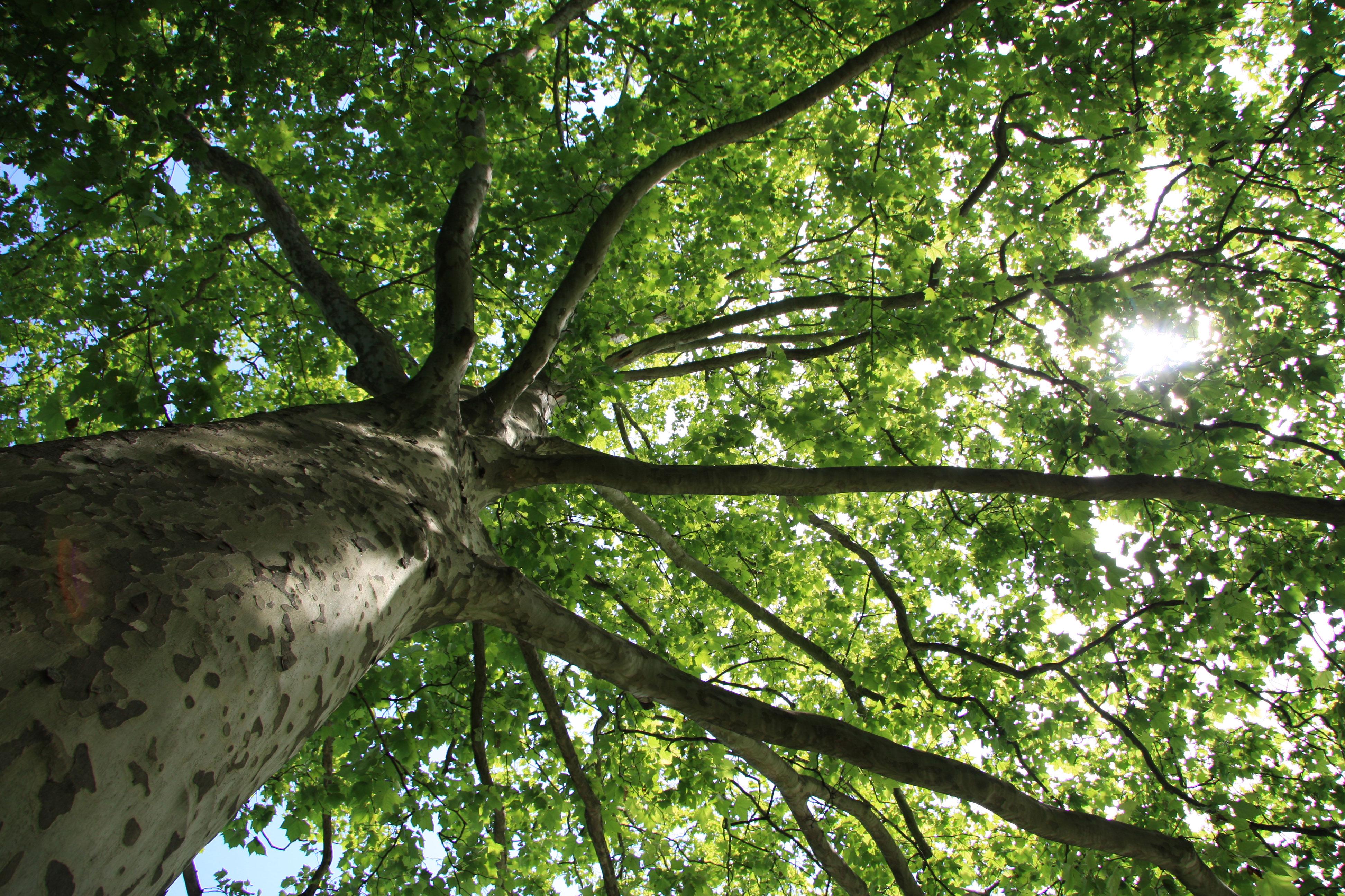proHolz Salzburg Baum