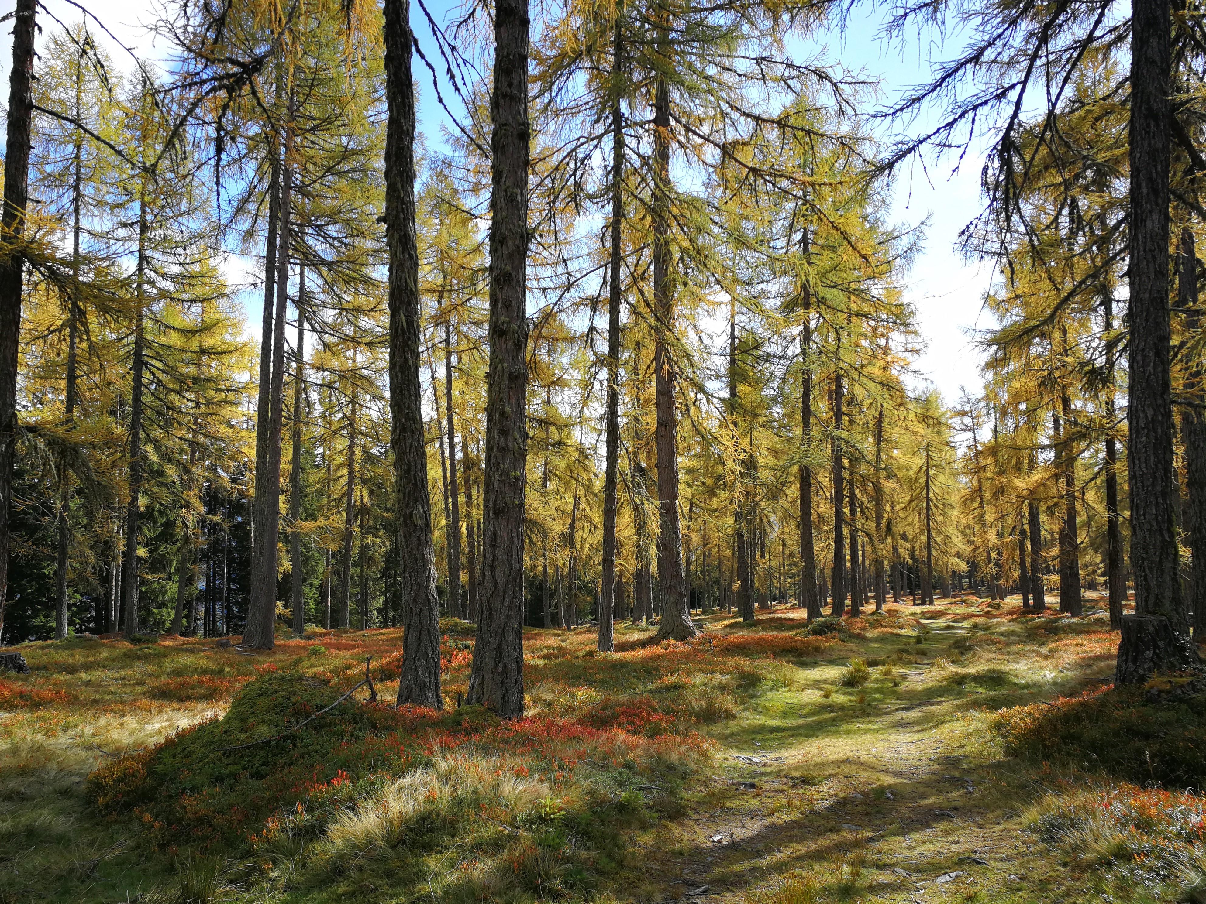 Die Wald- und Forstwirtschaft Salzburg